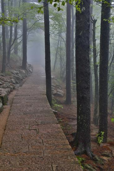 Trail in Fog, Yellow Mountains a UNESCO World Heritage Site-Darrell Gulin-Photographic Print