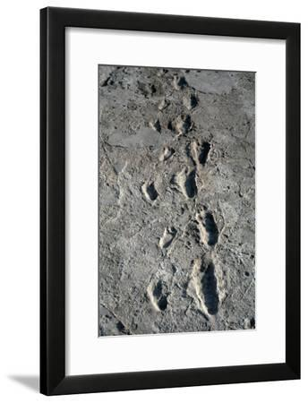Trail of Laetoli Footprints.-John Reader-Framed Photographic Print