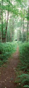 Trail Passing Through a Forest, Adirondack Mountains, Old Forge, Herkimer County