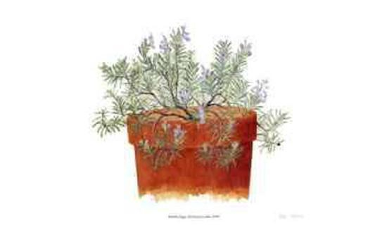 Trailing Lavender-Pamela Stagg-Collectable Print