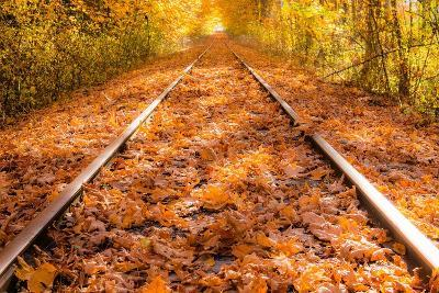 Train Tracks in the Fall-Tim Oldford-Photographic Print