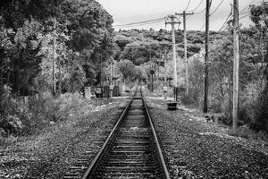 Train Tracks Oyster Bay New York B/W