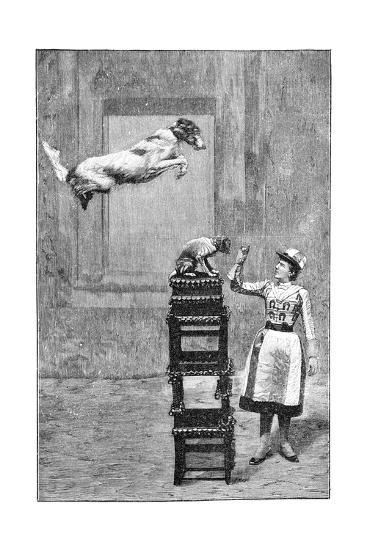 Trained Dogs, 19th Century-Science Photo Library-Giclee Print