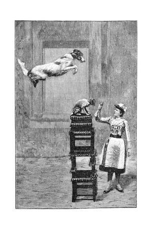 https://imgc.artprintimages.com/img/print/trained-dogs-19th-century_u-l-pk0ahi0.jpg?p=0