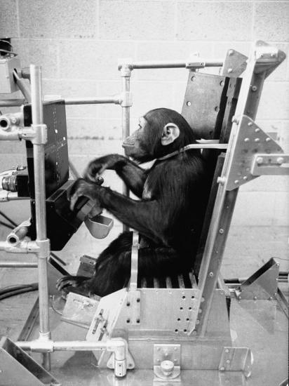 Training Chimpanzees at Hollowan Air Force Base for Trip into Space as Part of the Mercury Project-Ralph Crane-Photographic Print