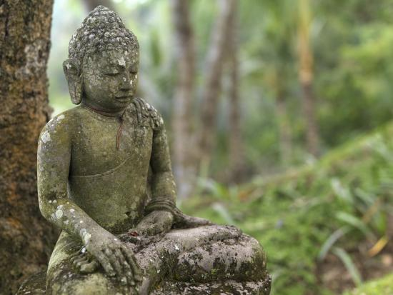 Tranquil Seated Buddha Statue in Bali's Lush Tropical Forest-xPacifica-Photographic Print