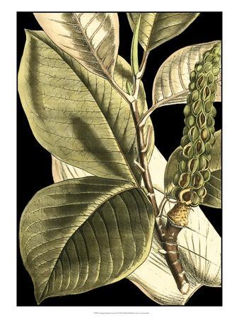 https://imgc.artprintimages.com/img/print/tranquil-tropical-leaves-ii_u-l-ph6kab0.jpg?p=0