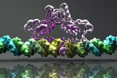 Transcription Factor And DNA Molecules-Phantatomix-Photographic Print