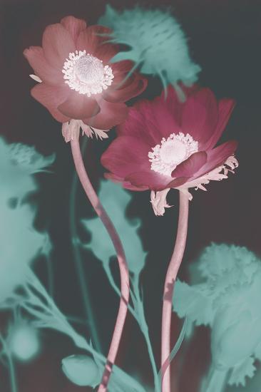 Transition-Katja Marzahn-Art Print