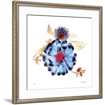 Translucent Dahlia-Kate Blacklock-Framed Giclee Print