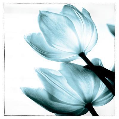 https://imgc.artprintimages.com/img/print/translucent-tulips-ii-sq-aqua_u-l-q1ayjwf0.jpg?p=0