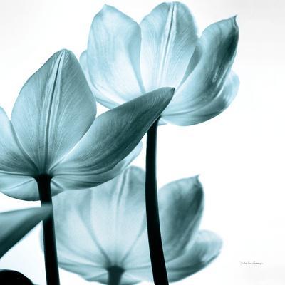 https://imgc.artprintimages.com/img/print/translucent-tulips-iii-sq-aqua-crop_u-l-q13dn8i0.jpg?p=0