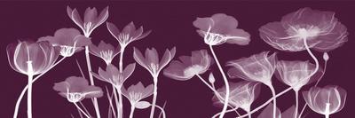 https://imgc.artprintimages.com/img/print/transparent-flora-c_u-l-f7tzy90.jpg?p=0