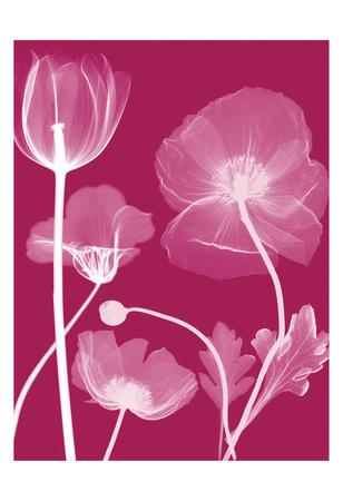 https://imgc.artprintimages.com/img/print/transparent-flora_u-l-f7tzyc0.jpg?p=0