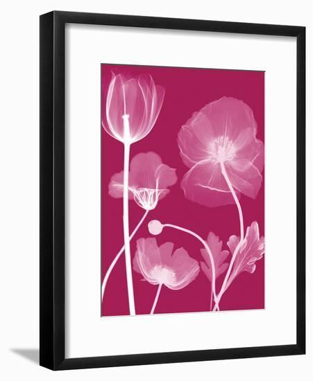 Transparent Flora-Albert Koetsier-Framed Art Print