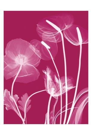 https://imgc.artprintimages.com/img/print/transparent-flora_u-l-f7tzyr0.jpg?p=0