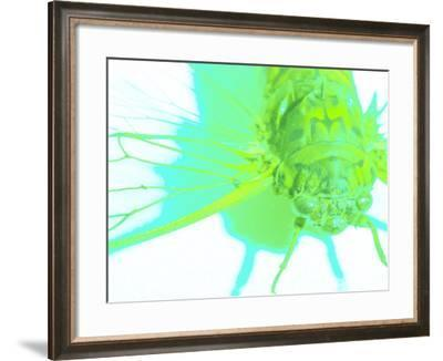 Transparent Wing of Bright Green Insect on White Background--Framed Photographic Print