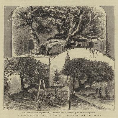 Transplantation of the Ancient Buckland Yew at Dover-William Henry James Boot-Giclee Print