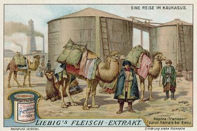 Transporting Naptha by Camel at Baku--Giclee Print