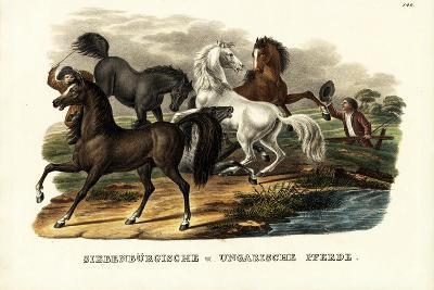 Transylvanian and Hungarian Horses, 1824-Karl Joseph Brodtmann-Giclee Print