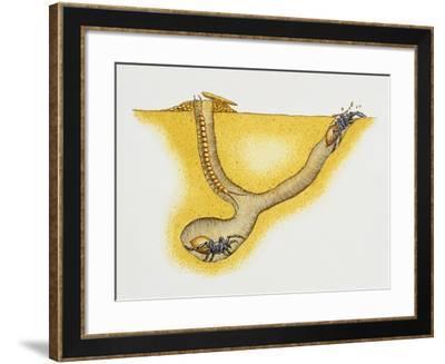 Trapdoor Spider Nest (Cteniza Sauvagesi), Ctenizidae, Artwork by Roger Kent--Framed Giclee Print