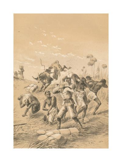 Travelers Stung By Bees, c1880--Giclee Print