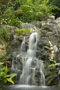 Tropical Rainforest and Waterfall by Travelpix Ltd