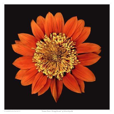 Treasure Flower - Orange Gnome-Richard Reynolds-Art Print