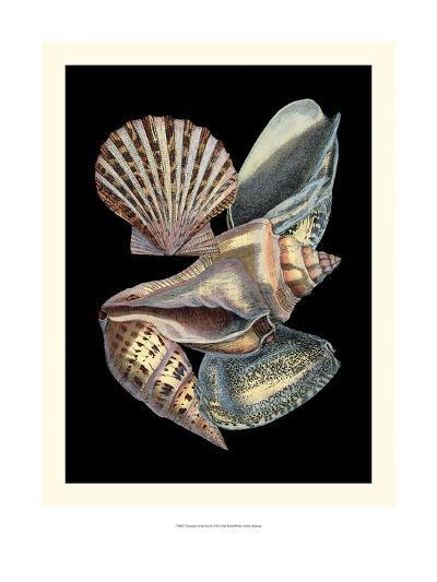 Treasures of the Sea II-Pierre-Joseph Redout?-Art Print