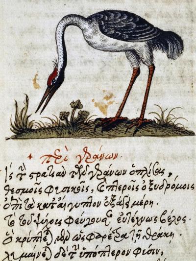 Treatise on Stork--Giclee Print