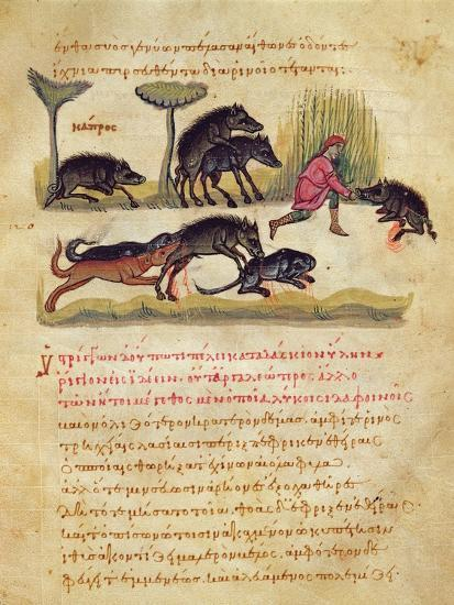Treatise on the Boar: Life, Mating, Hunting, Illustration from the 'Cynegetica' by Oppian-Italian-Giclee Print