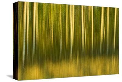 Tree Abstraction II-Mike Grandmaison-Stretched Canvas Print