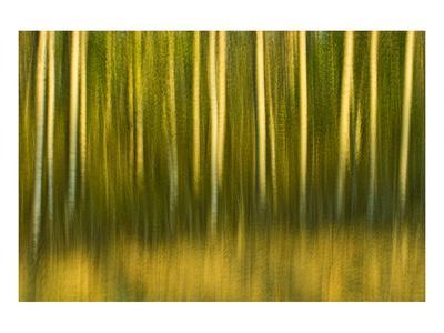 https://imgc.artprintimages.com/img/print/tree-abstraction-ii_u-l-f74hgu0.jpg?p=0