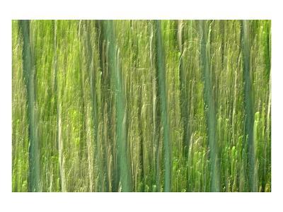 Tree Abstraction III-Mike Grandmaison-Art Print
