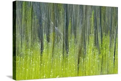 Tree Abstraction V-Mike Grandmaison-Stretched Canvas Print