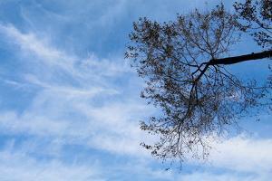 Tree Against a Blue Sky