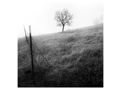 Tree and Fence I-Shane Settle-Art Print