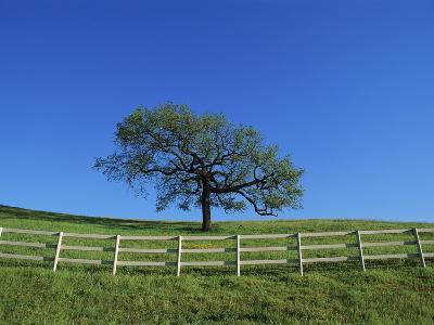 Tree and Fence in Pasture-Craig Aurness-Photographic Print