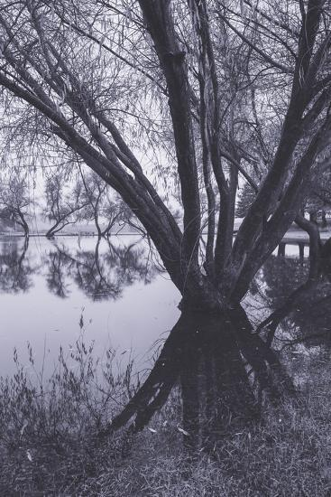 Tree and Pond Reflections at Marin County Pond California-Vincent James-Photographic Print