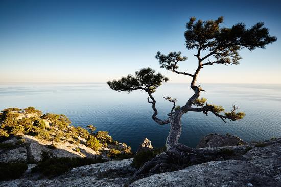 Tree and Sea at Sunset. Crimea Landscape. Nature Background-Oleg Gekman-Photographic Print