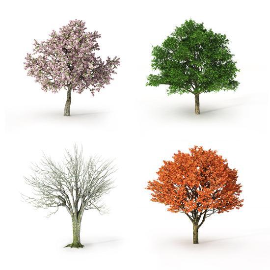 Tree At Four Seasons Photographic Print Mike Kiev Art Com
