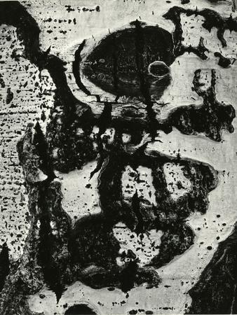 https://imgc.artprintimages.com/img/print/tree-bark-1972_u-l-q1g6km90.jpg?p=0
