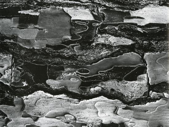 Tree Bark, c.1970-Brett Weston-Photographic Print