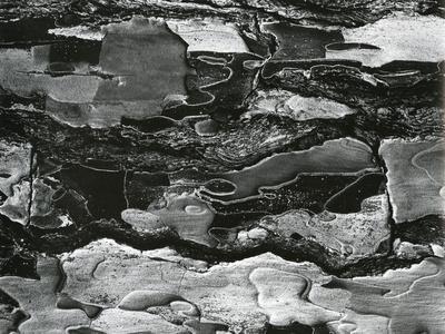 https://imgc.artprintimages.com/img/print/tree-bark-c-1970_u-l-q1g6wk10.jpg?p=0
