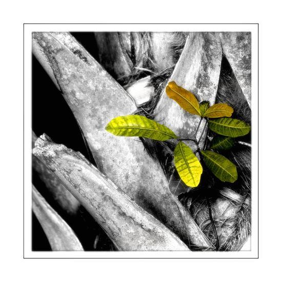 Tree Bark W - Leaves-Harold Silverman-Giclee Print