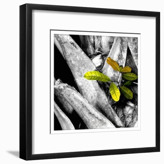 Tree Bark W - Leaves-Harold Silverman-Framed Giclee Print