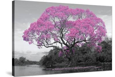 Tree - Blossom