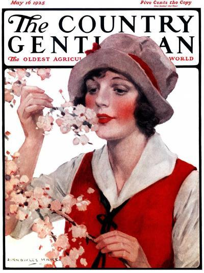 """""""Tree Blossoms,"""" Country Gentleman Cover, May 16, 1925-J^ Knowles Hare-Giclee Print"""