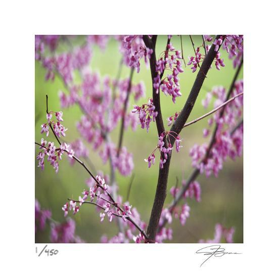 Tree Blossoms-Ken Bremer-Limited Edition