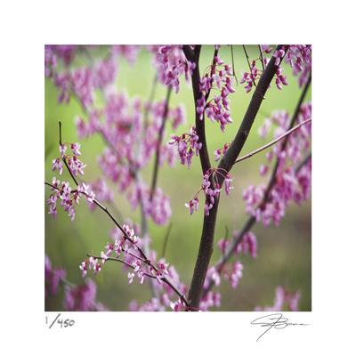 https://imgc.artprintimages.com/img/print/tree-blossoms_u-l-f8tkf70.jpg?p=0